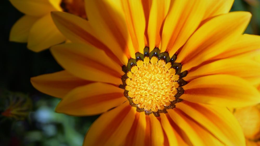 Closeup wildflower wallpaper