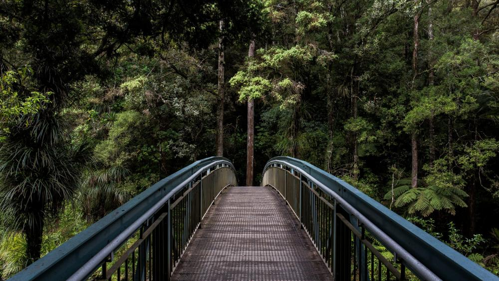 Bridge across Hatea River below Whangarei Falls wallpaper