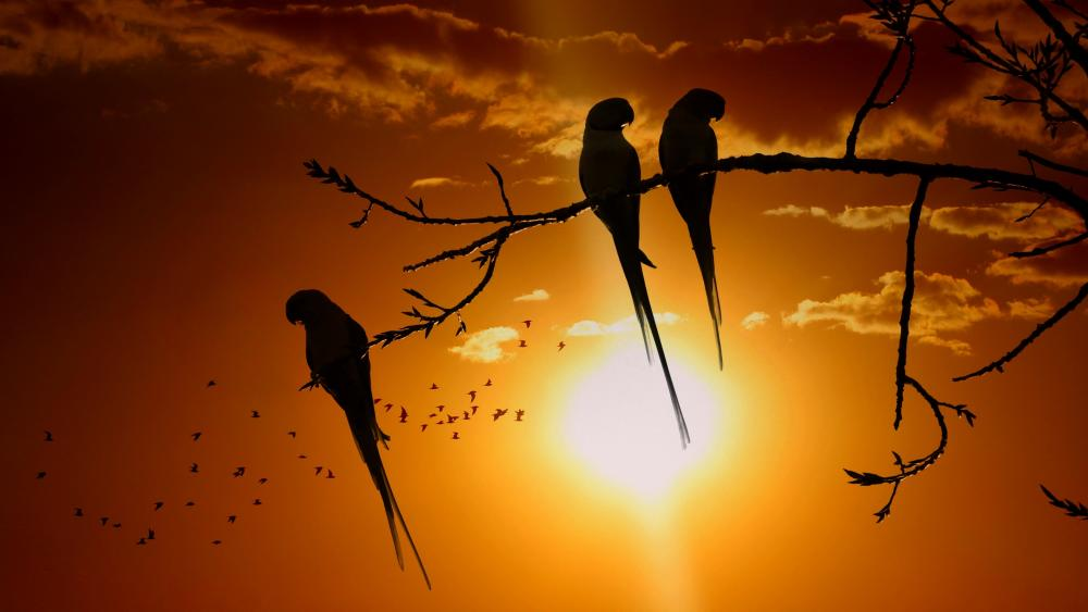 Parrots' silhouette in the sunset wallpaper