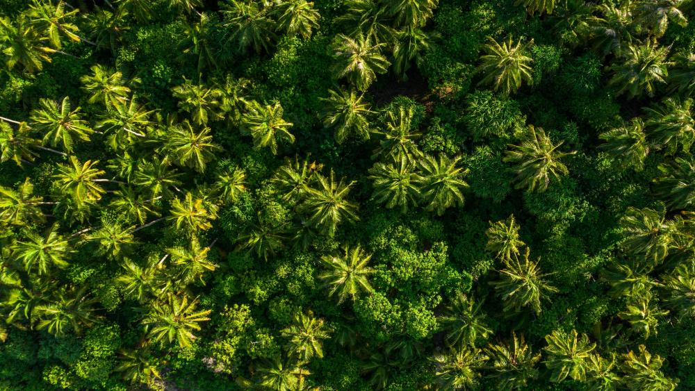 Drone View of Tropical Forest wallpaper