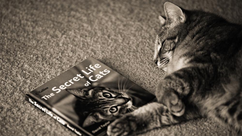 Cat fell asleep on a book wallpaper
