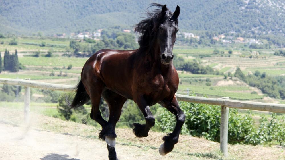 Running brown horse wallpaper