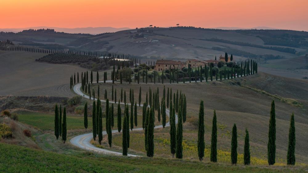 Cypress lane in Tuscany wallpaper