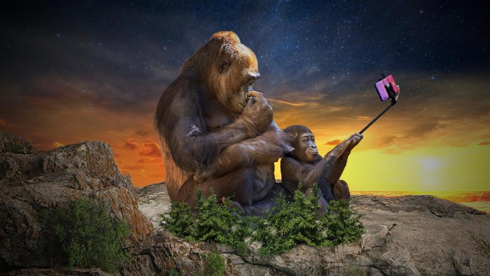 Gorilla selfie wallpaper