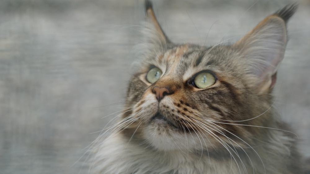 Blurred cat wallpaper