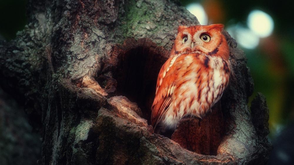 Owl nest wallpaper