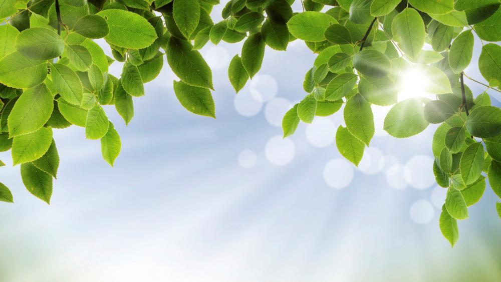 Green leaves frame wallpaper