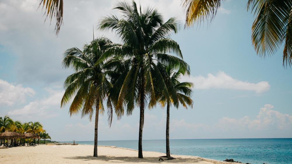 Palms in Cozumel island,  Mexico wallpaper