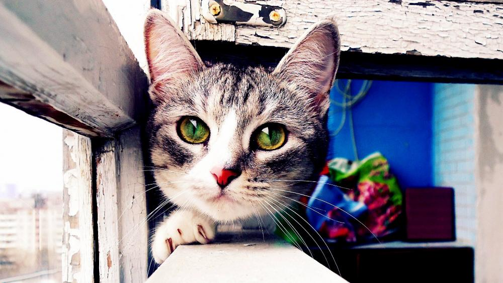 Cat in the window wallpaper