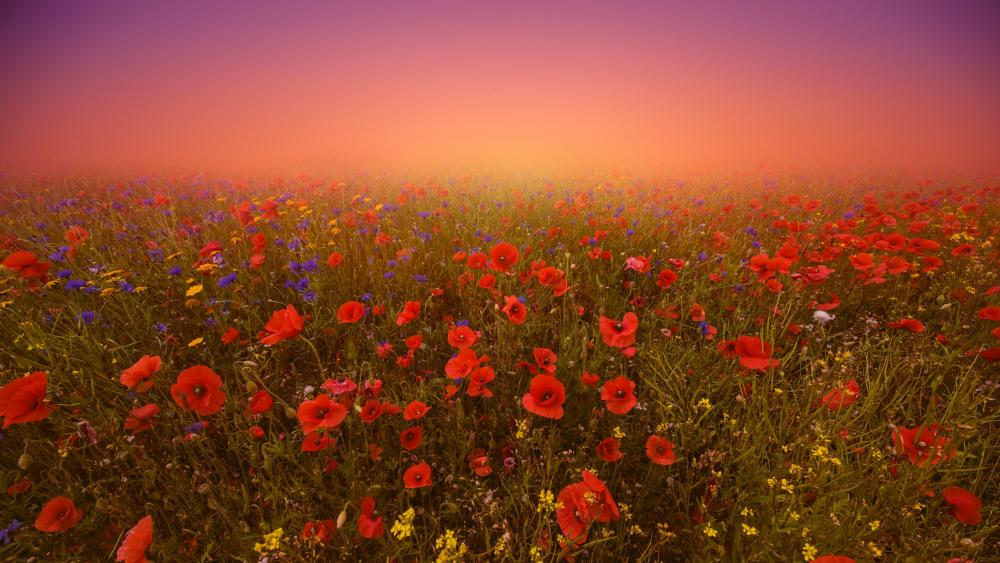 Flower field with red poppies wallpaper