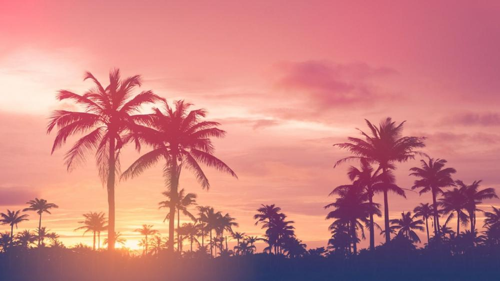Tropical sunset with palm trees wallpaper