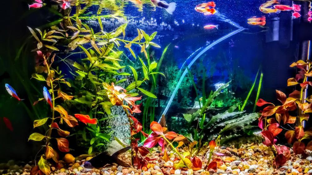aquarium life wallpaper