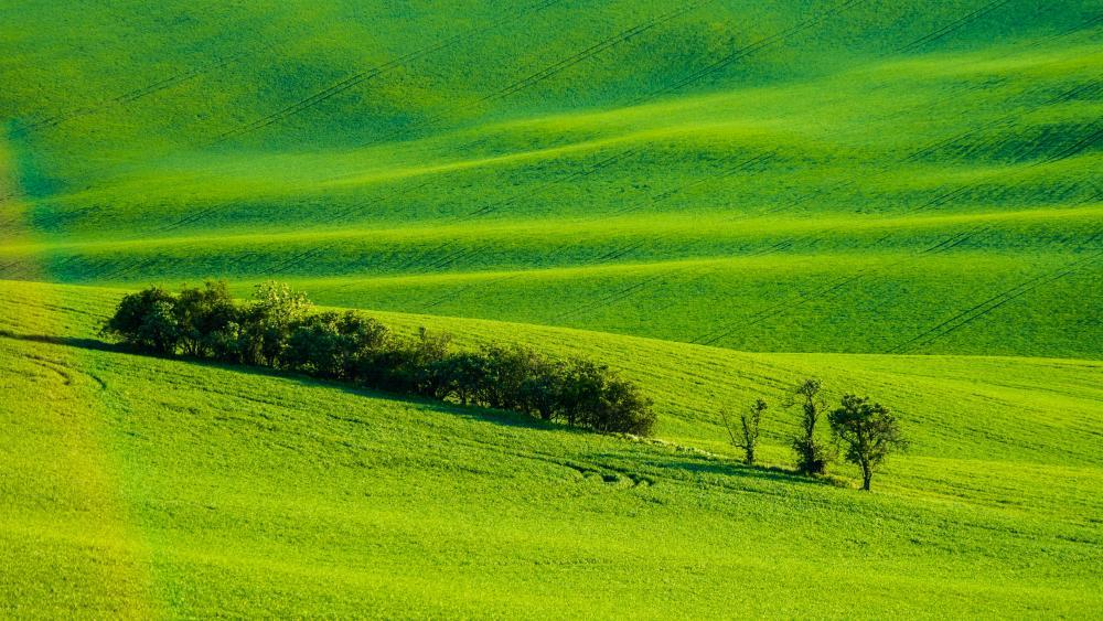 Moravian Tuscany (Czech Republic) wallpaper