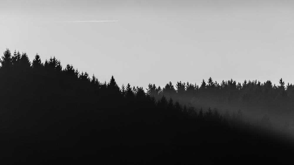 Minimalistic forest wallpaper
