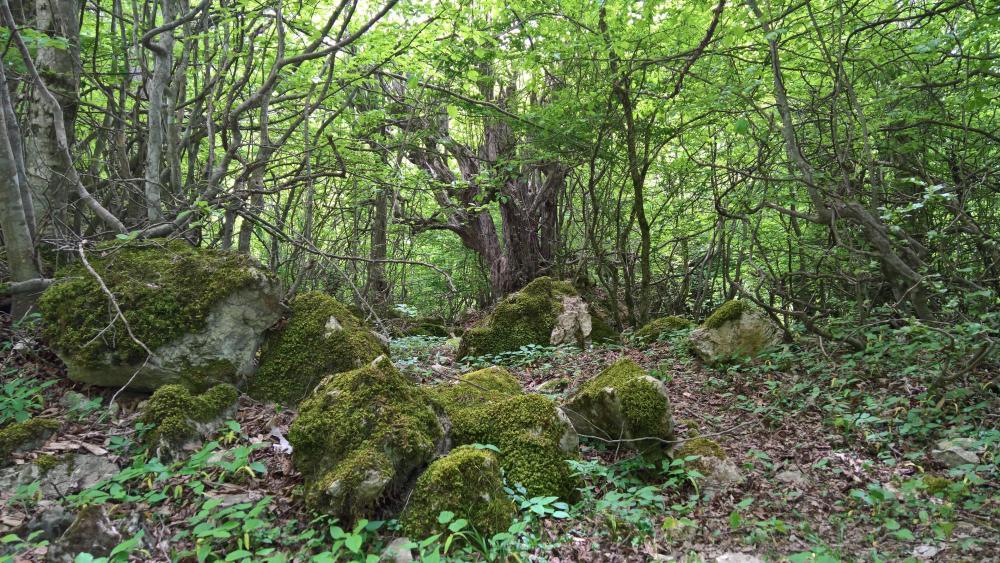 Forest in Golestan wallpaper