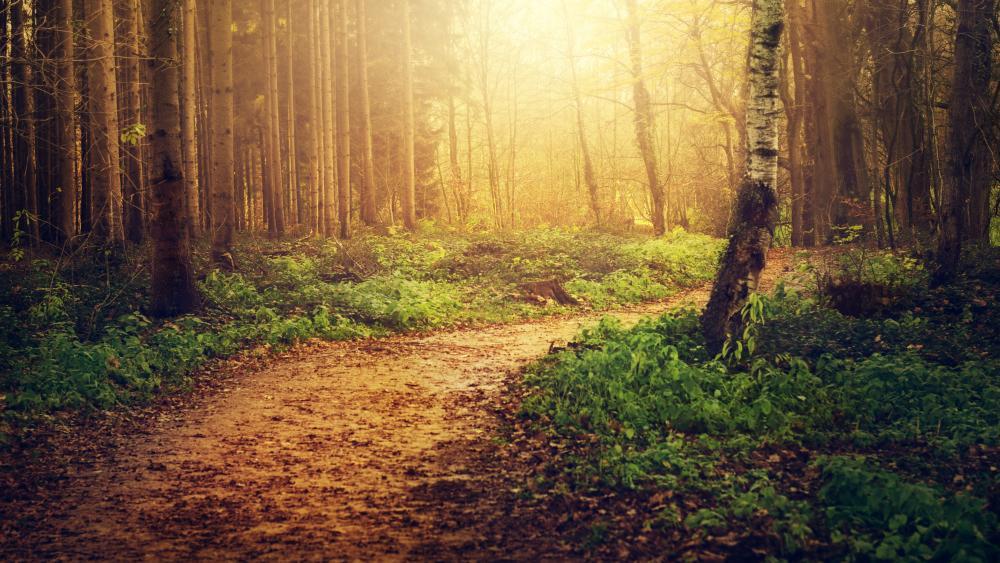 Mystic forest trail wallpaper