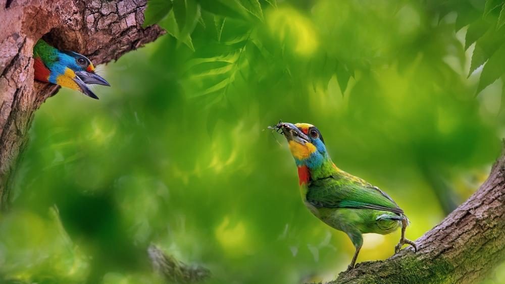 Colorful birds wallpaper