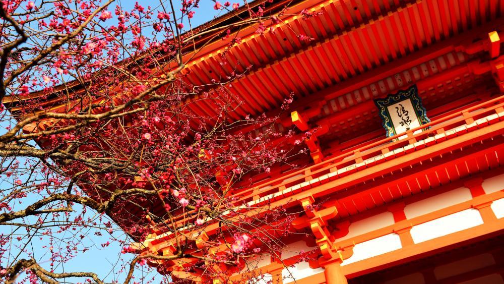 Kiyomizu-dera Temple wallpaper