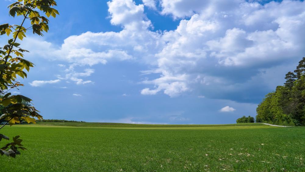 Endless green summer field wallpaper