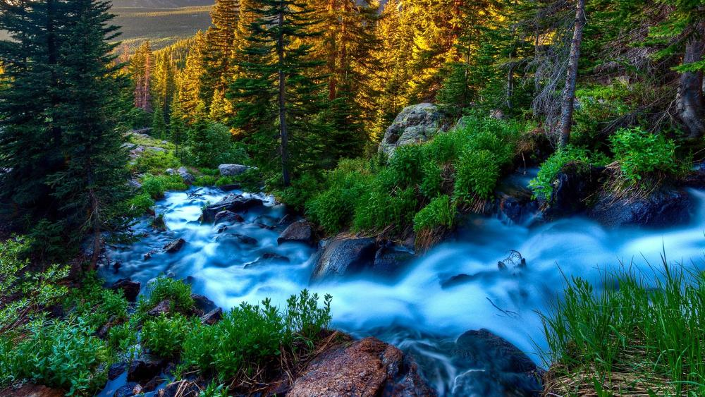 Stream flowing through the forest wallpaper
