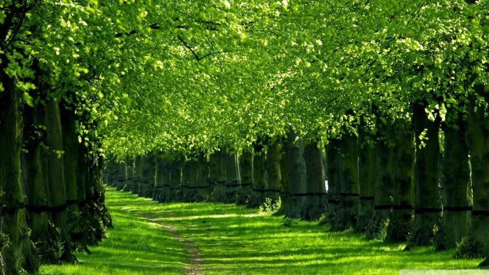 Green tree lane wallpaper