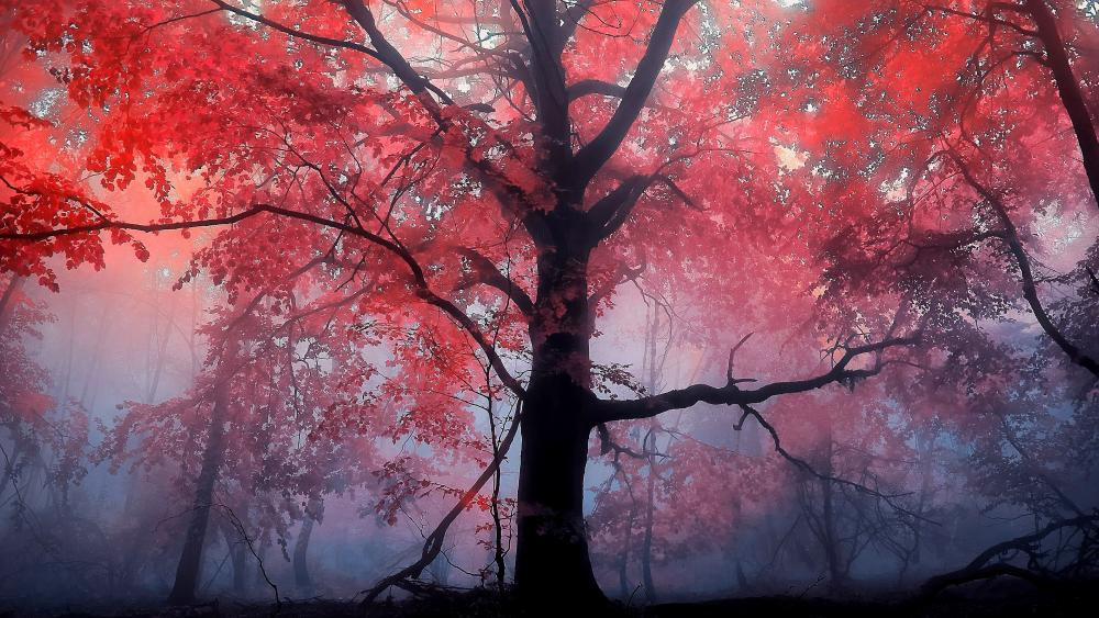 Mystical autumn forest wallpaper