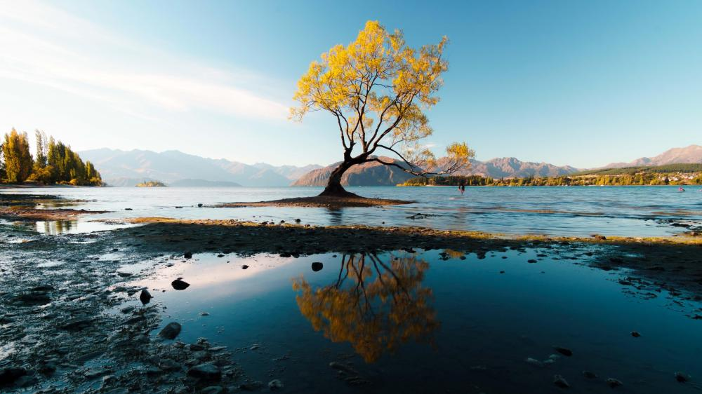 That Wanaka Tree wallpaper