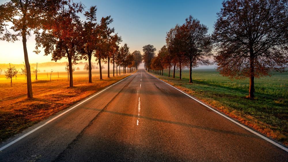 Tree lined road wallpaper