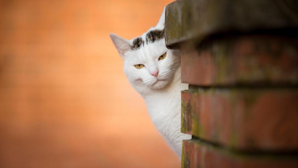 Peeking cat behind the brick wall wallpaper