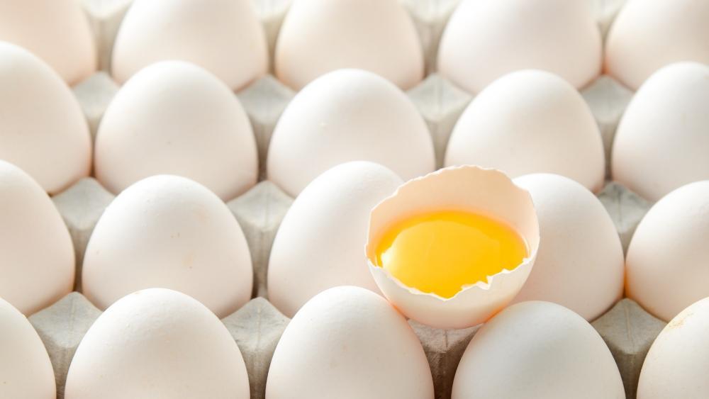 egg food wallpaper