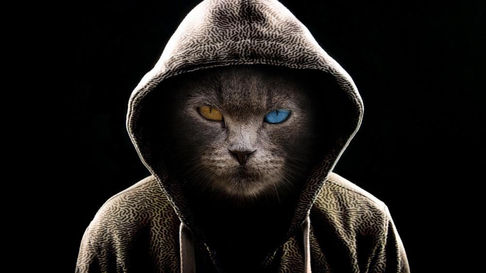 Heterochromia eyes cat in hoodie wallpaper