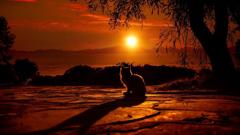 Cat watching the sunset wallpaper