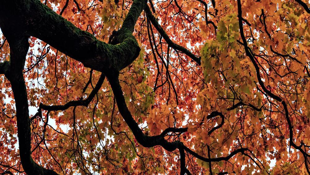 Mabel tree wallpaper