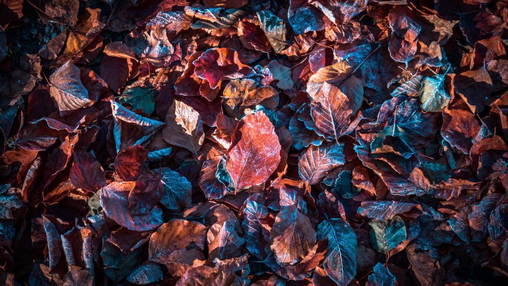 Hoary dry leaves wallpaper