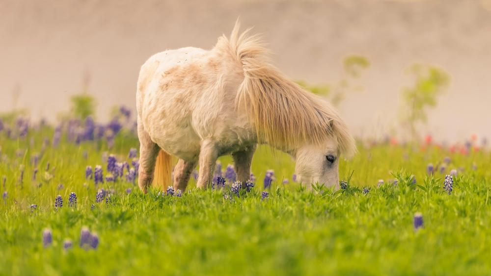 Grazing pony wallpaper