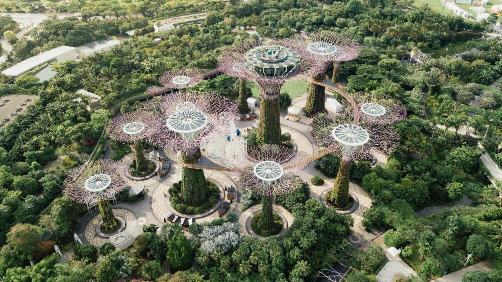 Supertree Grove from Above wallpaper