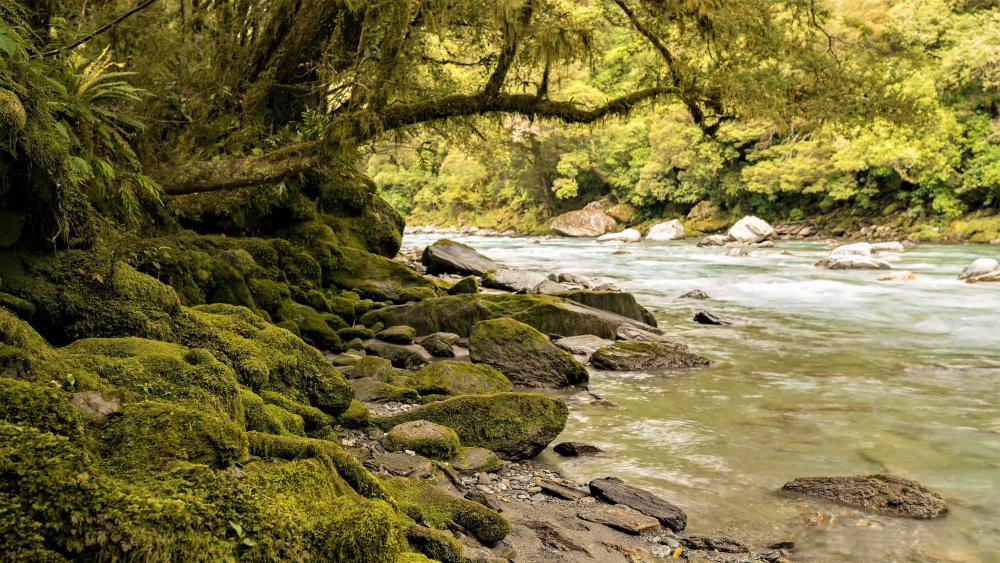 Mossy bank of the river wallpaper