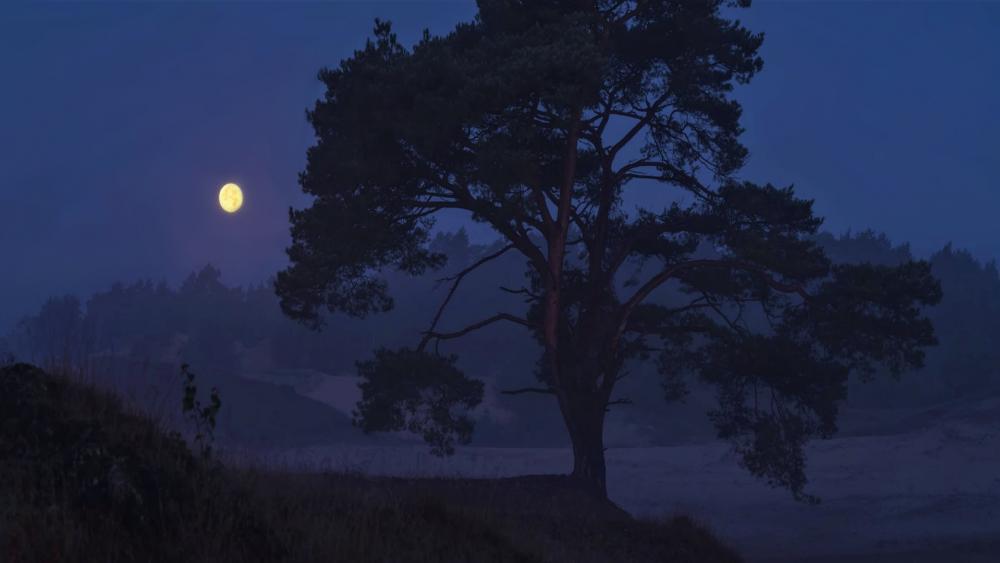 Moon (Silent) wallpaper