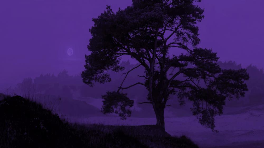 Purple winter night wallpaper
