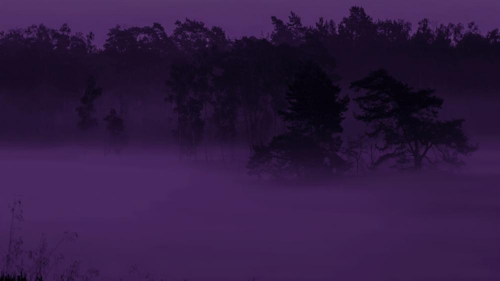 Purple haze wallpaper