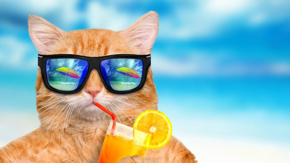 Cat in summer vacation wallpaper