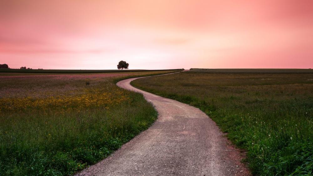 winding road in a field wallpaper