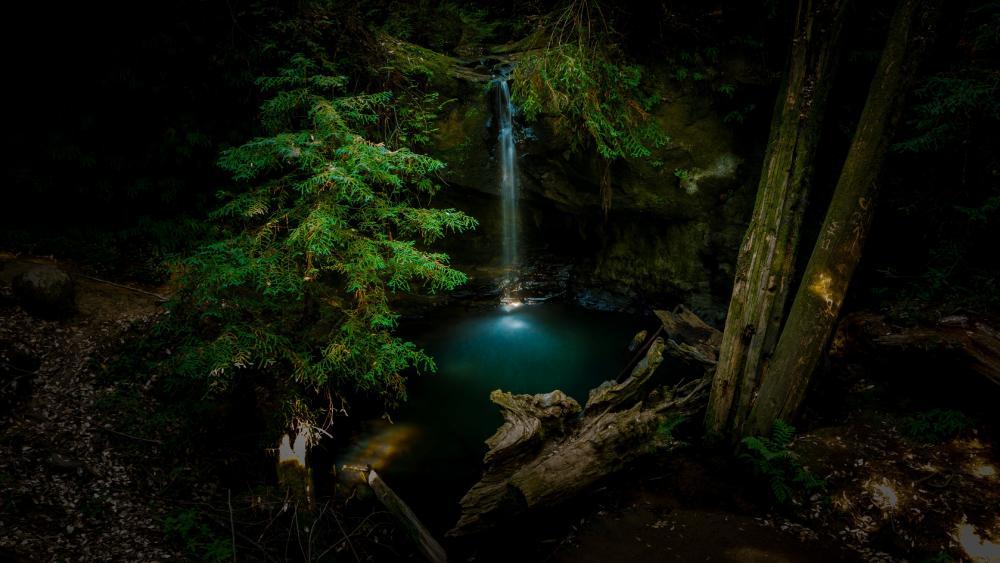 Big Basin Redwoods State Park wallpaper