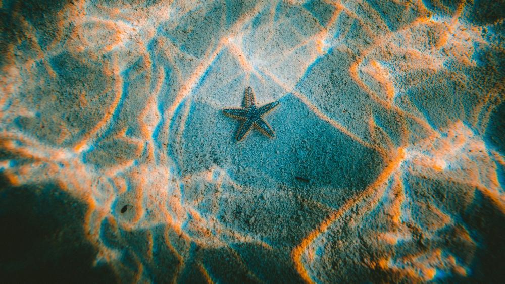 Starfish in the underwater sunlight wallpaper
