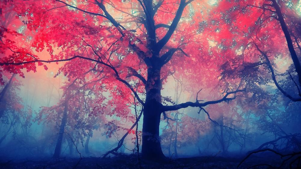 Magical red forest at fall wallpaper