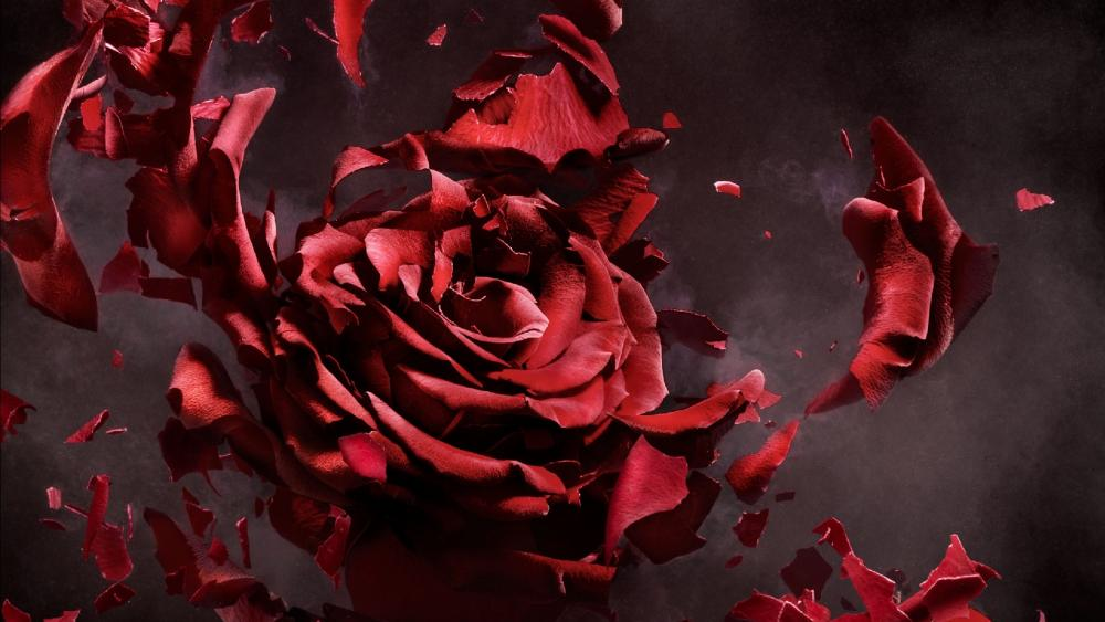 Rose explosion wallpaper