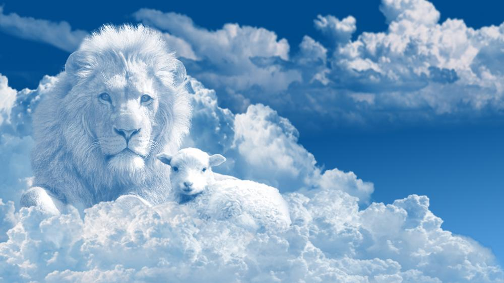 Lamb with a lion on the clouds wallpaper