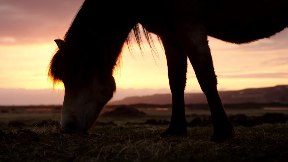 Horse under sunset wallpaper