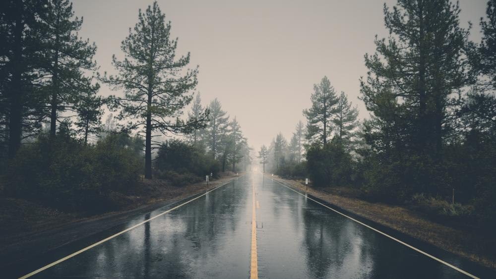 Wet road between tall trees wallpaper