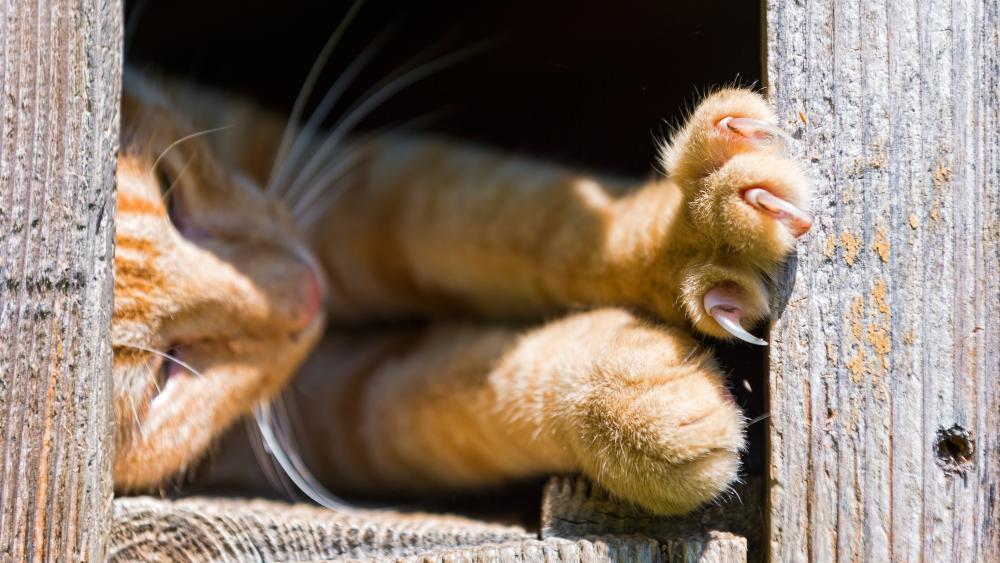 Cat claws wallpaper